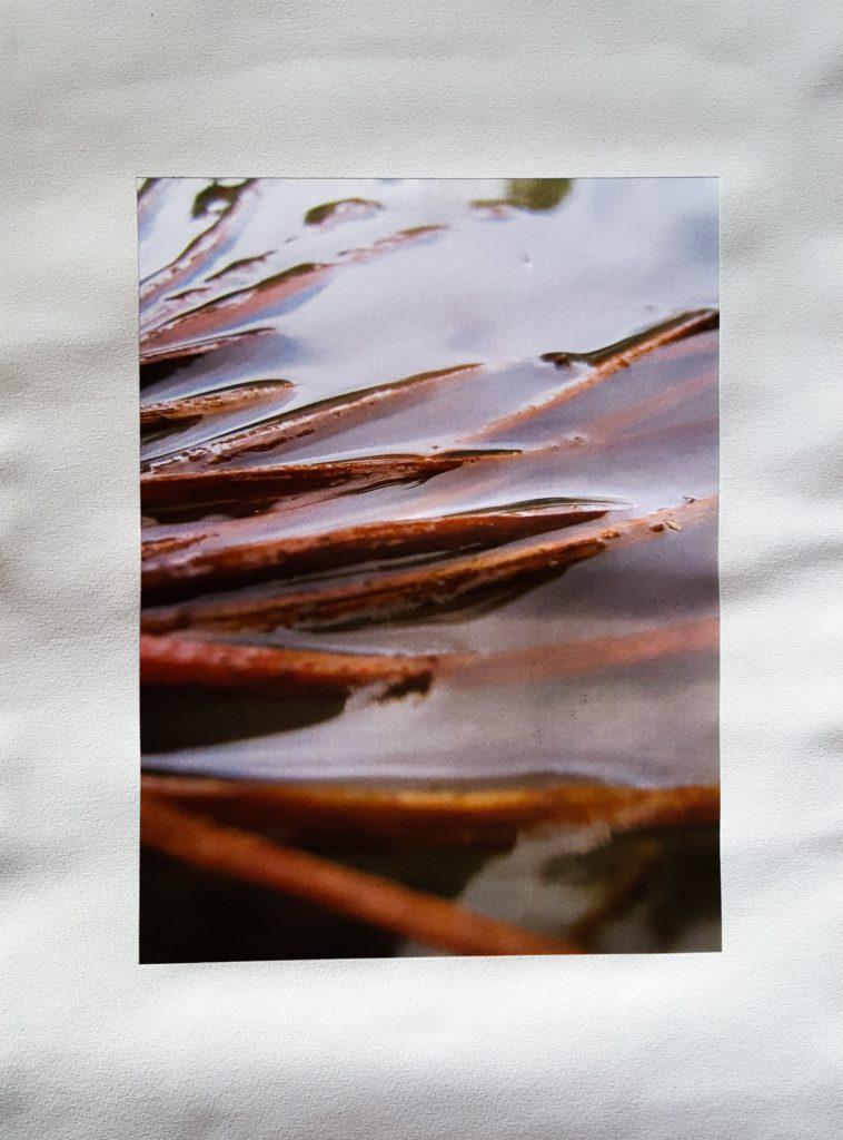 Photographie macro eau